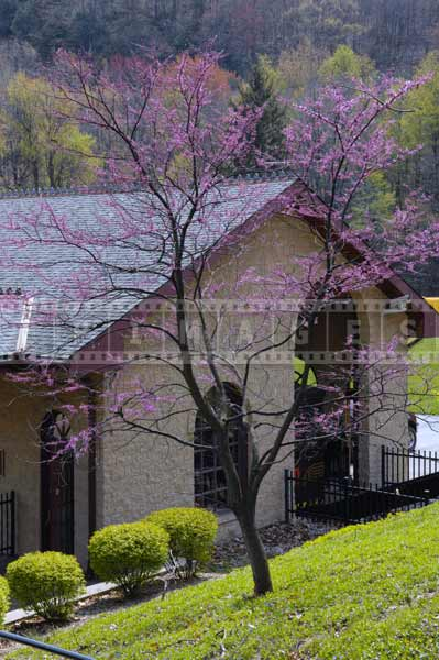 Purple flowering tree above visitors center, attractions off the beaten path