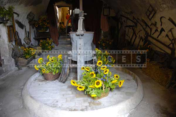 south france european cityscapes - sunflowers decorations