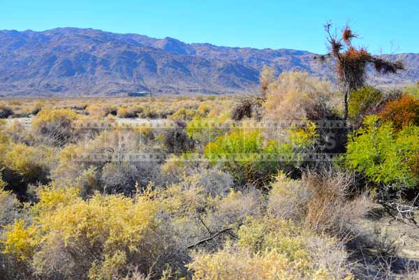 oasis of mara joshua tree national park scenic landscape pictures