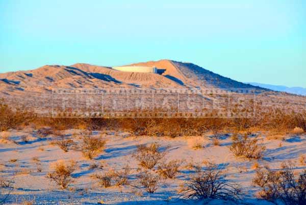 Sunrise lights up desert plants, landscape photogrpahy