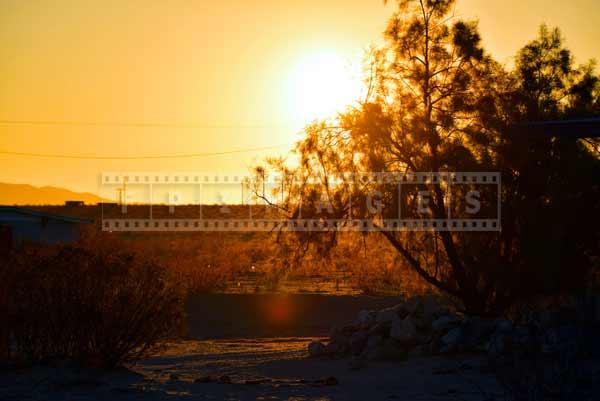 Tamarisk tree silhouette at sunrise in the desert. travel images