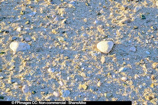Texture of desert sand in sunrise light, free image