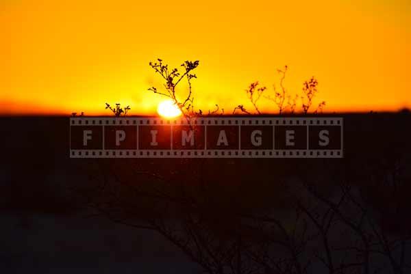 amazing desert plants in early morning light