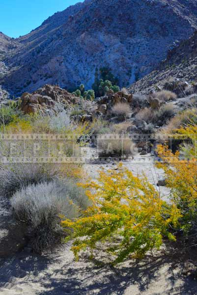 49 palms oasis hiking trail pictures green desert plants