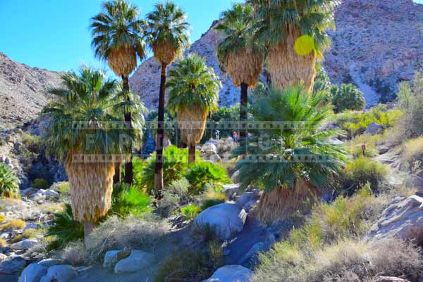 Striking green vegetation at the oasis