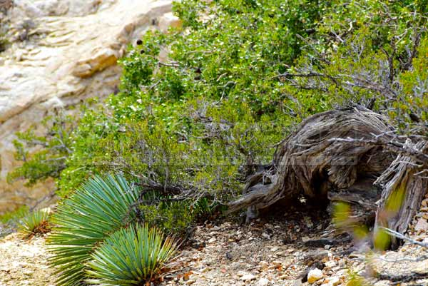 Mountain detail - dry tree trunk and new green growth