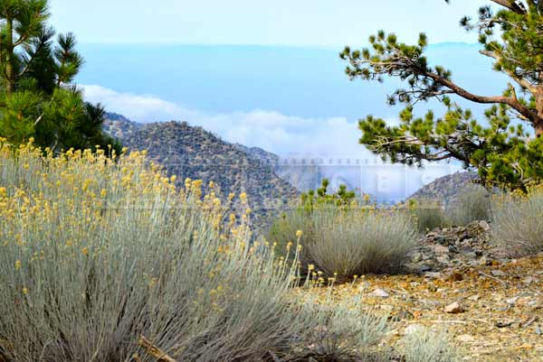 angeles national forest mountains pictures