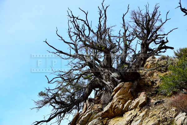 Dead tree at the edge of the mountain