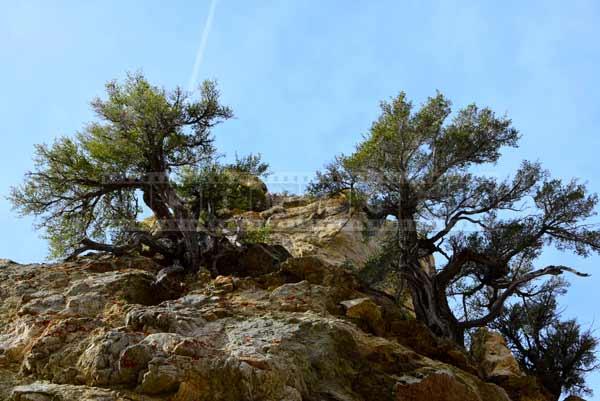 Two small trees growing in tough mountain terrain