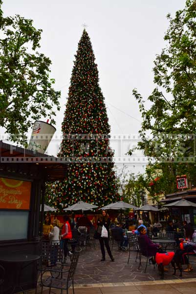 Large Christmas tree at the Grove