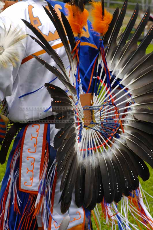 bustle with sacred eagle feathers on the back of fancy dancer