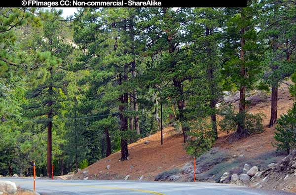 Angels Crest highway in the mountains, plan a trip