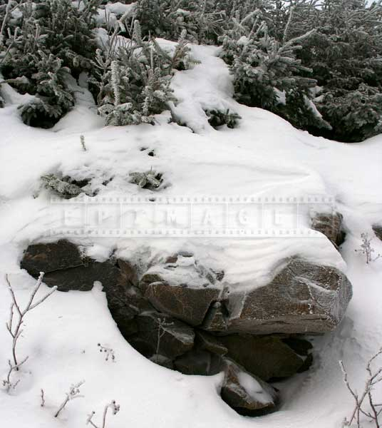 Snow covered rocks and forest near Mont Sainte Anne