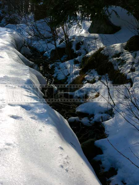 winter forest pictures stream flowing amid snow banks