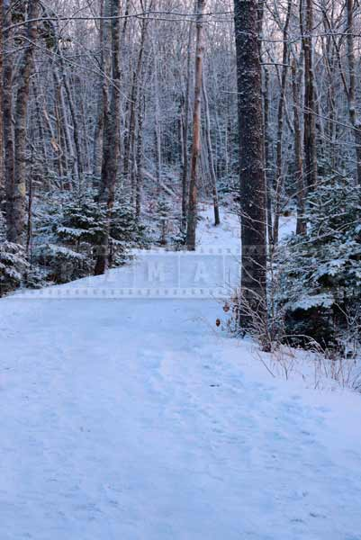 winter hiking trails nature photography
