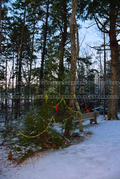 Christmas tree decorations on the hiking trail