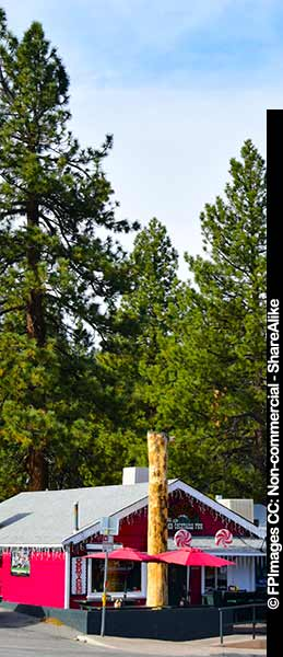 Huge evergreen trees line the streets, travel images
