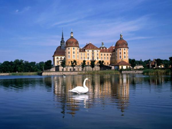 german lakes with swans