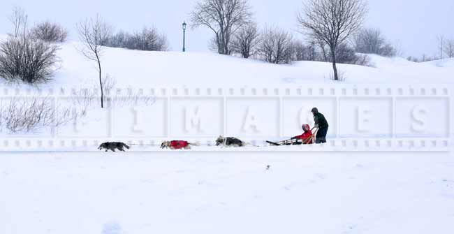 Dog sled ride - great winter activity