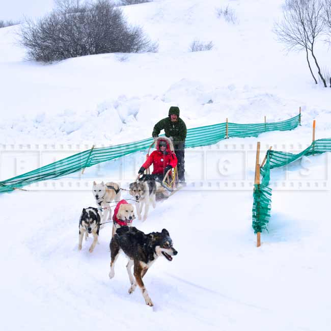 Dog sled ride - winter fun family activities, Quebec, Canada