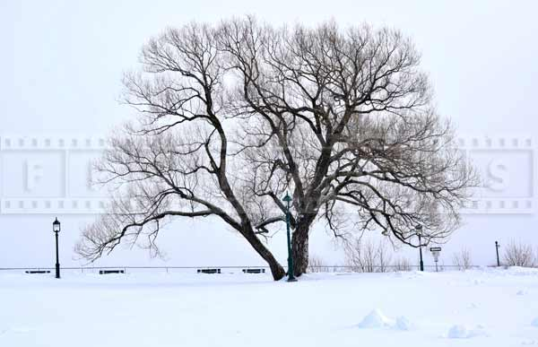 Beautiful winter landscape with a tree - the Plains of Abraham park