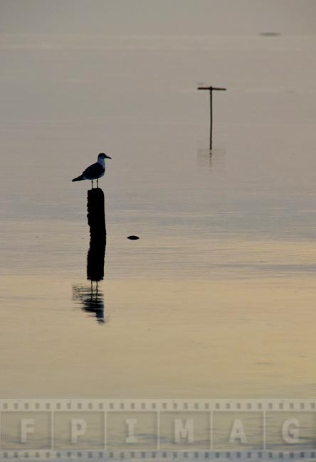 Seagull sitting on an old wooden post