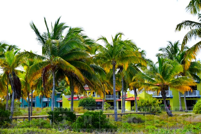 Blue and green hotel buildings nestled amongst palm trees