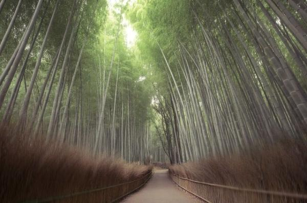 Sensual Images Of Japan For Landscape Photography Fans - Calming photos of japans landscapes captured by hidenobu suzuki