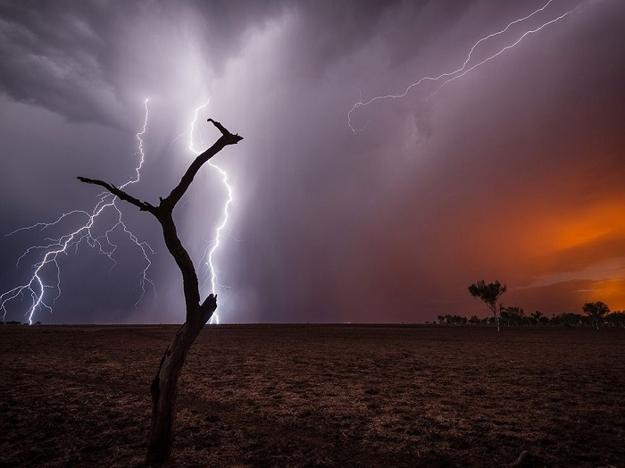landscapes, images of birds and animals