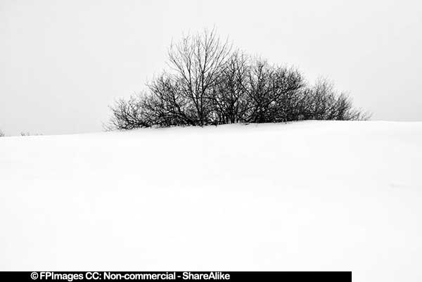 Single bush in the middle of the snow winter nature pcture