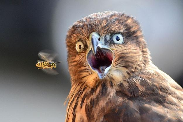 images of animals, surprised portraits