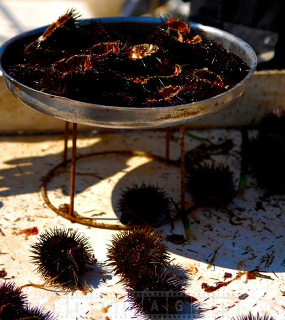 Live sea urchins seafood dish