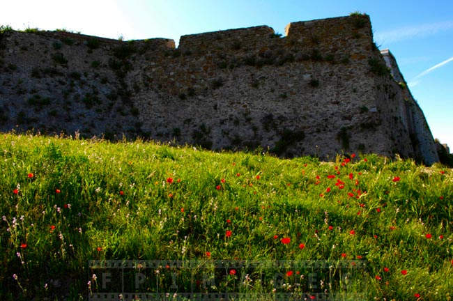 Old citadel wall and a field of spring wildflowers