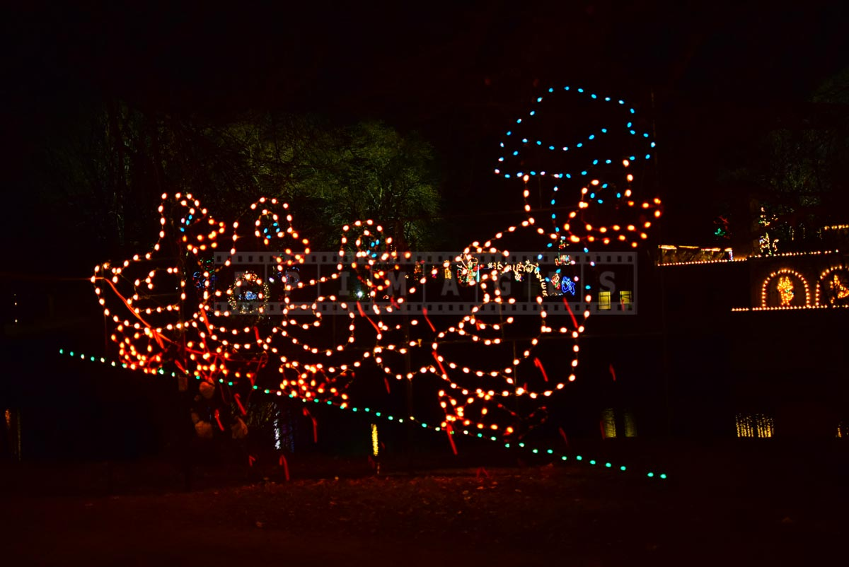 Mohter duck and ducklings Christmas lights