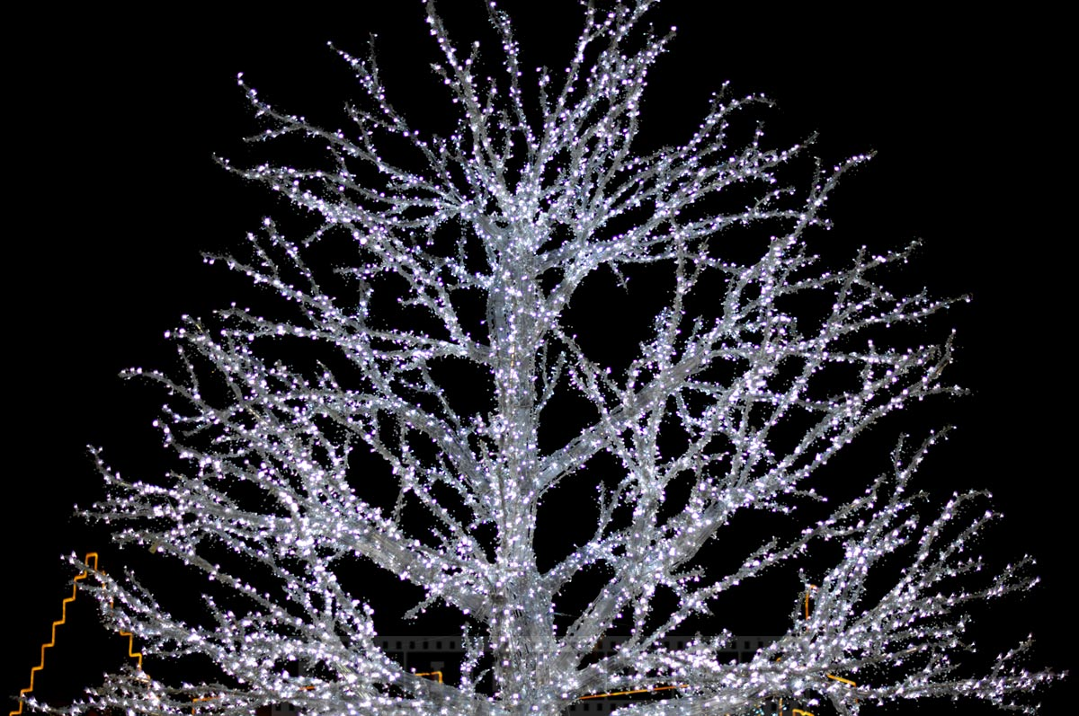 Tree with outdoor lights at Market square