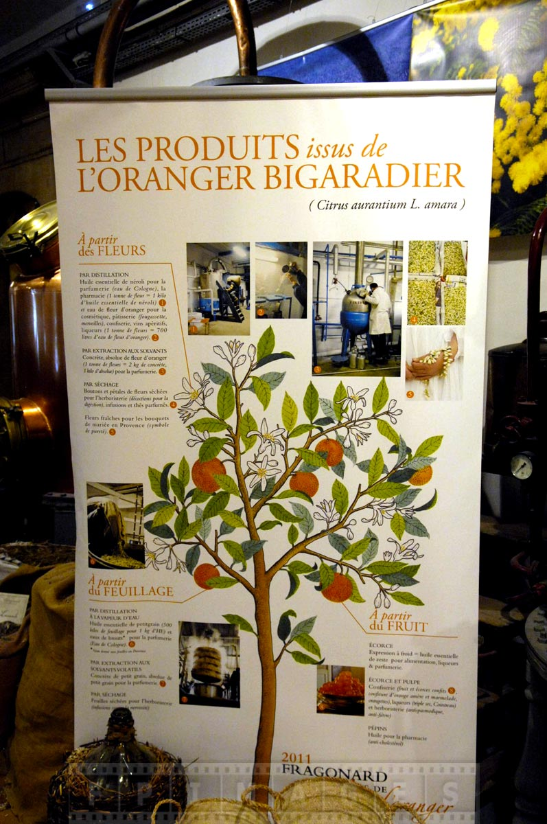 Poster describing uses of orange tree in perfume making