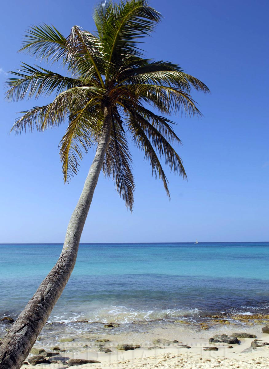 Picture perfect tropical scene from unspoiled beaches near Catalonia Gran Dominicus Resort