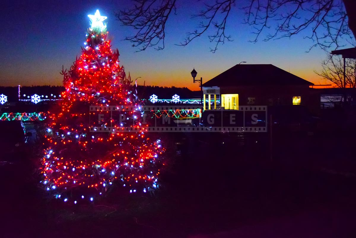 Saint Andrews waterfront sunset colors and Christmas-tree