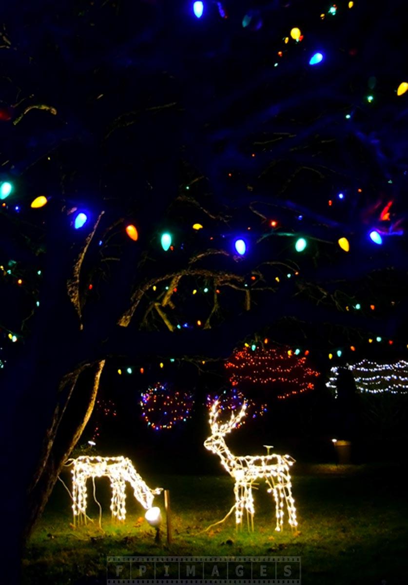 Xmas lights outdoor decorations saint andrews canada