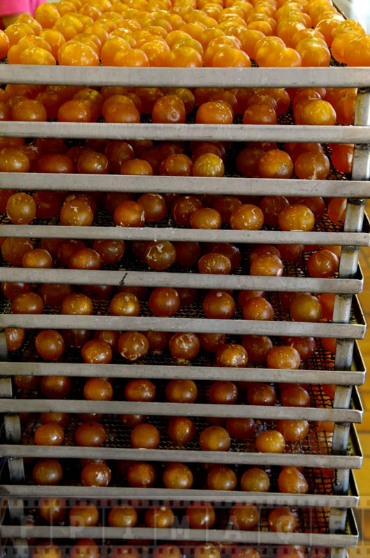 Golden and delicious clementines waiting to be packaged