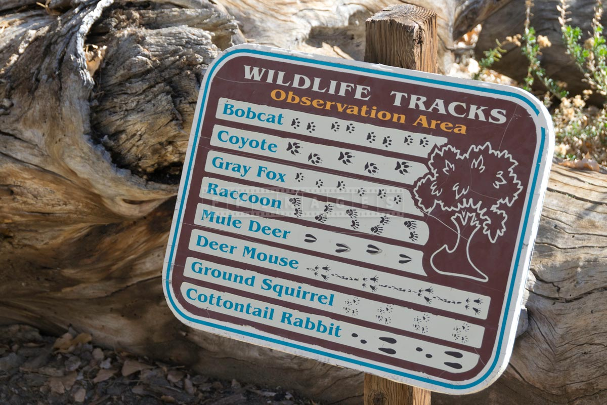 Picture of different animals tracks