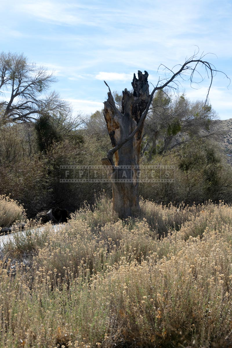 Dry tree trunk near the hike
