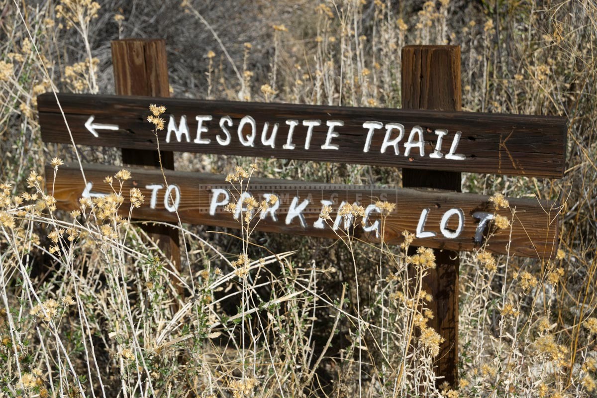 Wooden sign for Mesquite trail