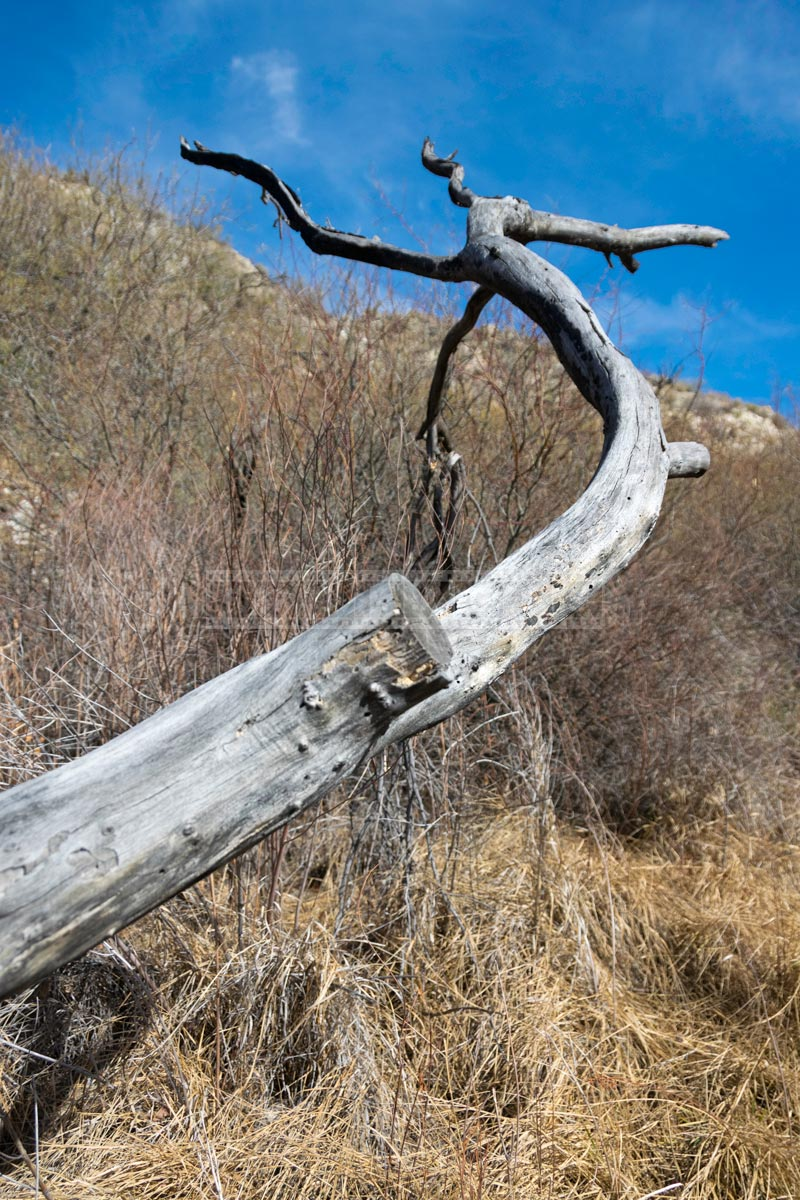Dry Curved tree branch