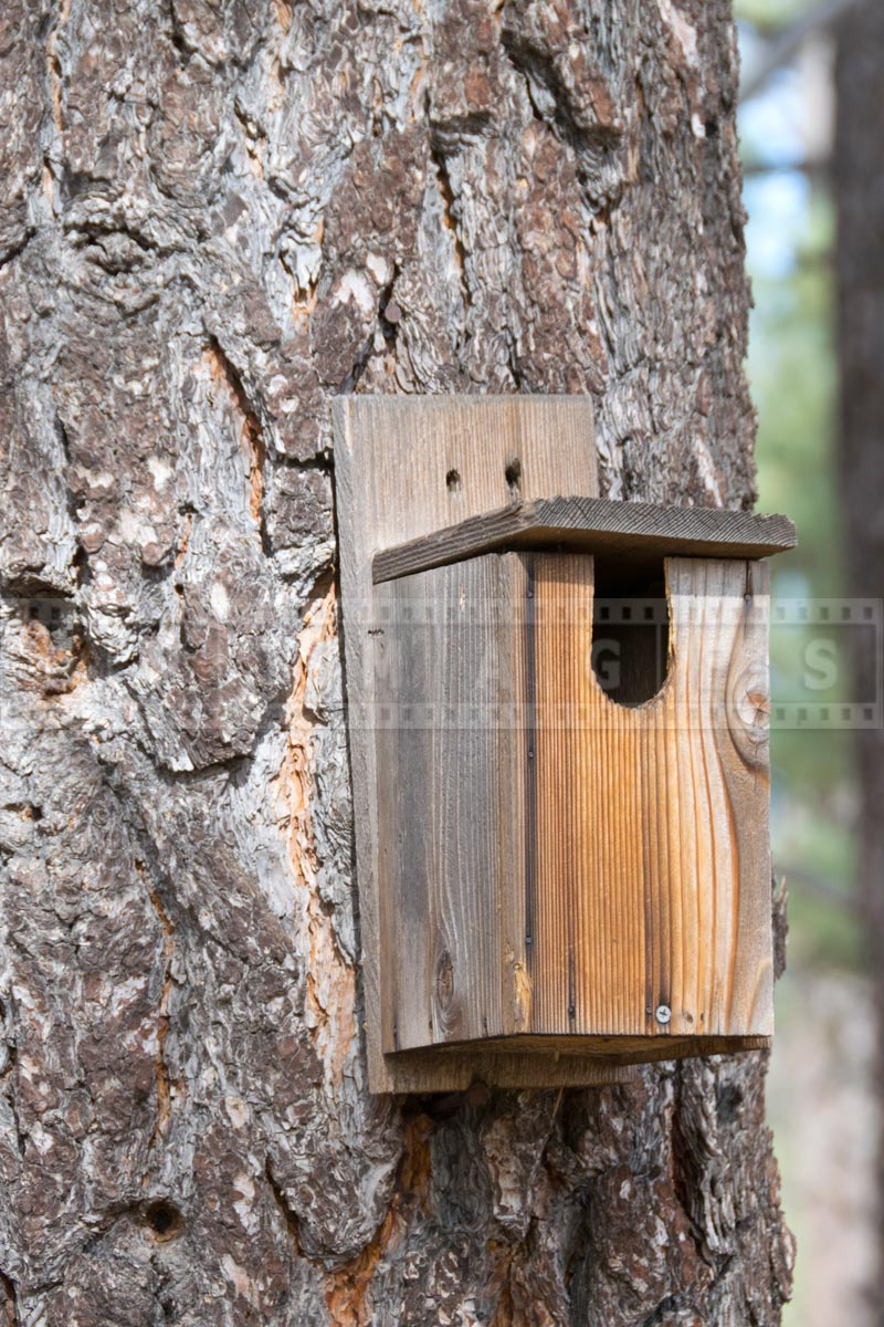 Birdhouse at Ramona trail