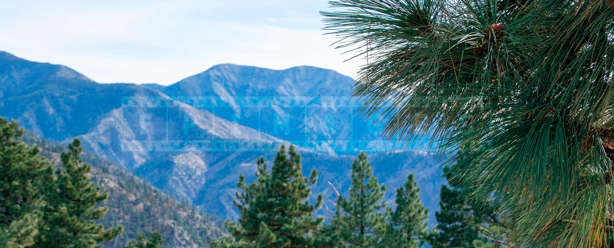 Mountain ridges and pine trees in Angeles National forest