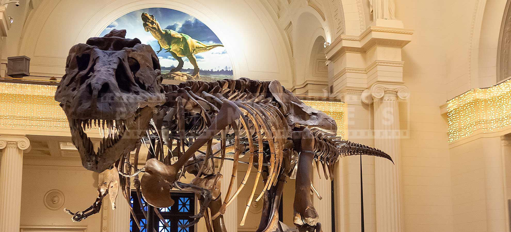 T-Rex Sue skeleton in Chicago Field Museum