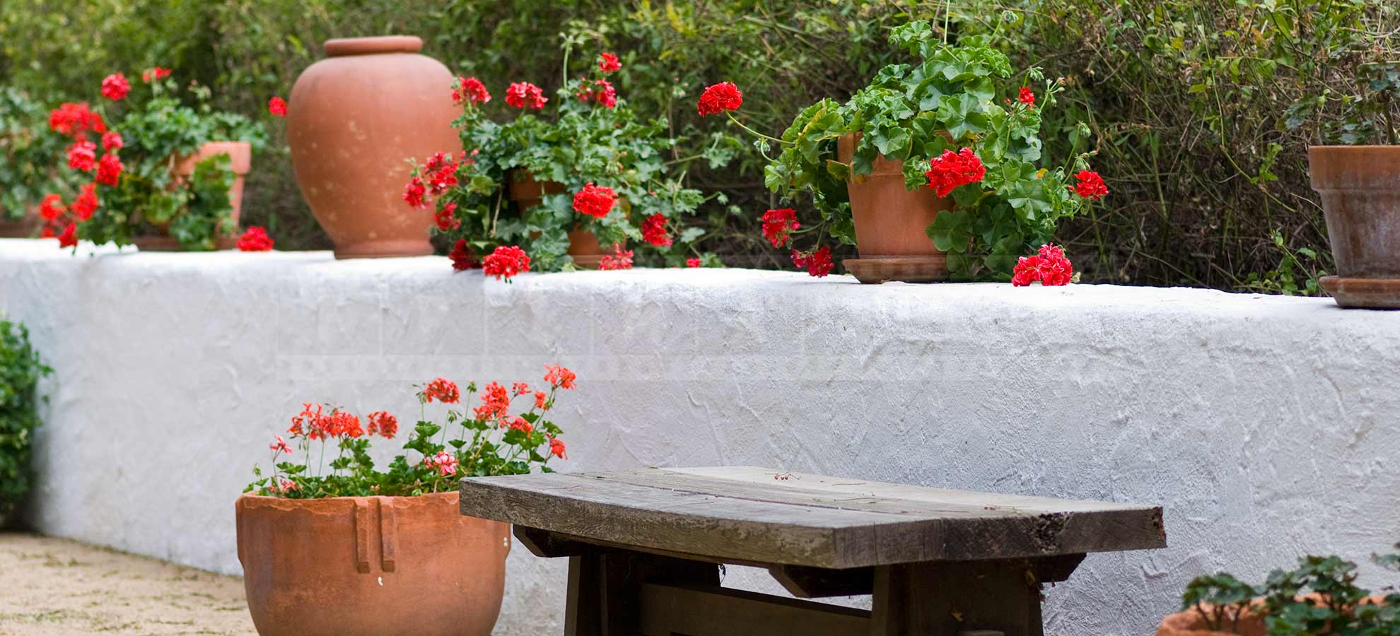 Bench and Clay Pots and Geranium Red Flowers
