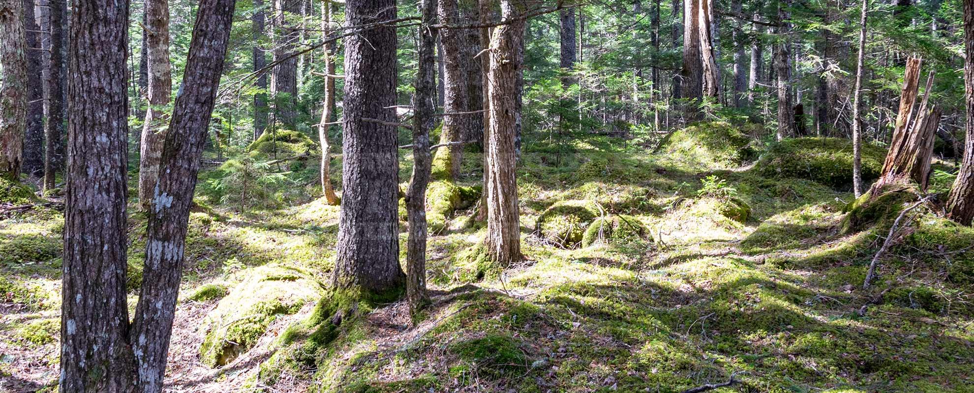 forest hike in Nova Scotia, beautiful wild nature